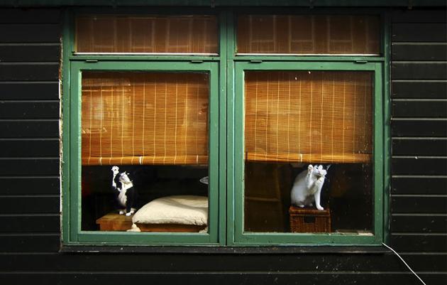 Fine-looking Photos of Animals Looking through Windows (7)