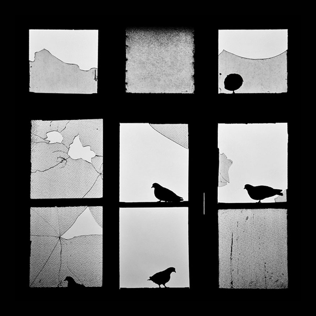 Fine-looking Photos of Animals Looking through Windows (8)