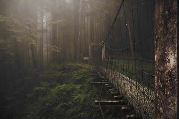 Forest Bridge, Alishan Mountain, Taiwan