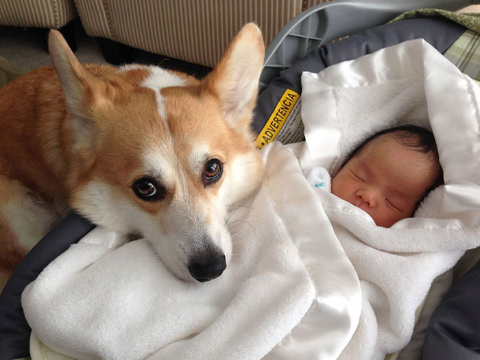 Adorable Photos kids with dog (10)
