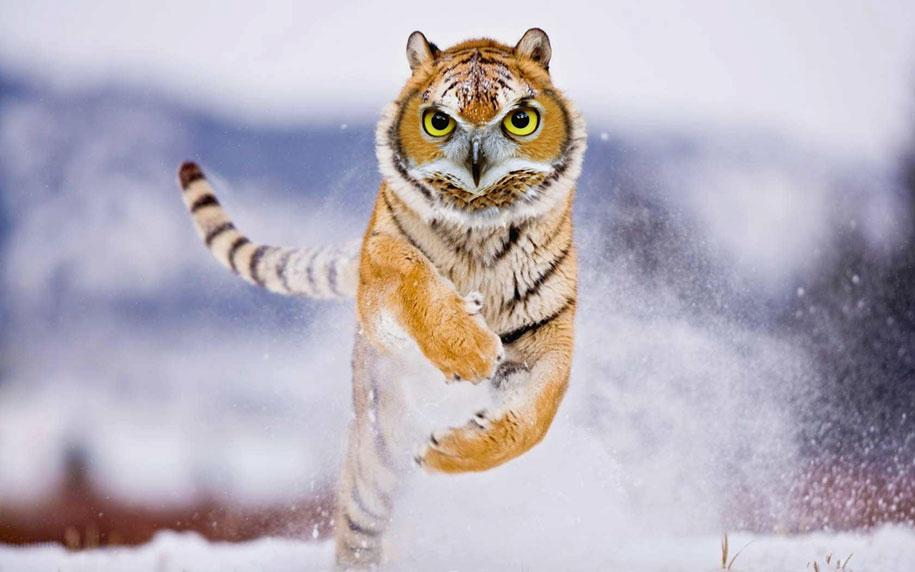 15 Creative Animal Surreal Photos (1)