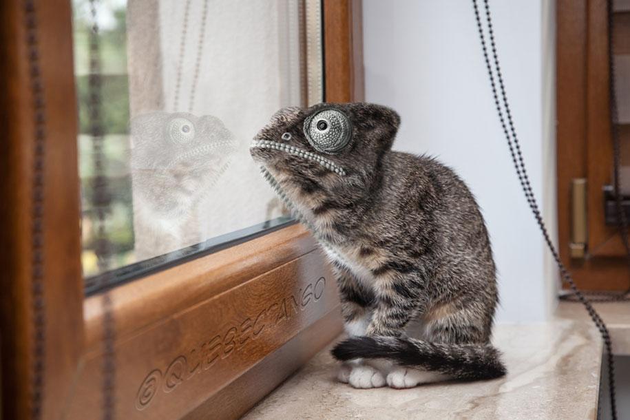 15 Creative Animal Surreal Photos (5)