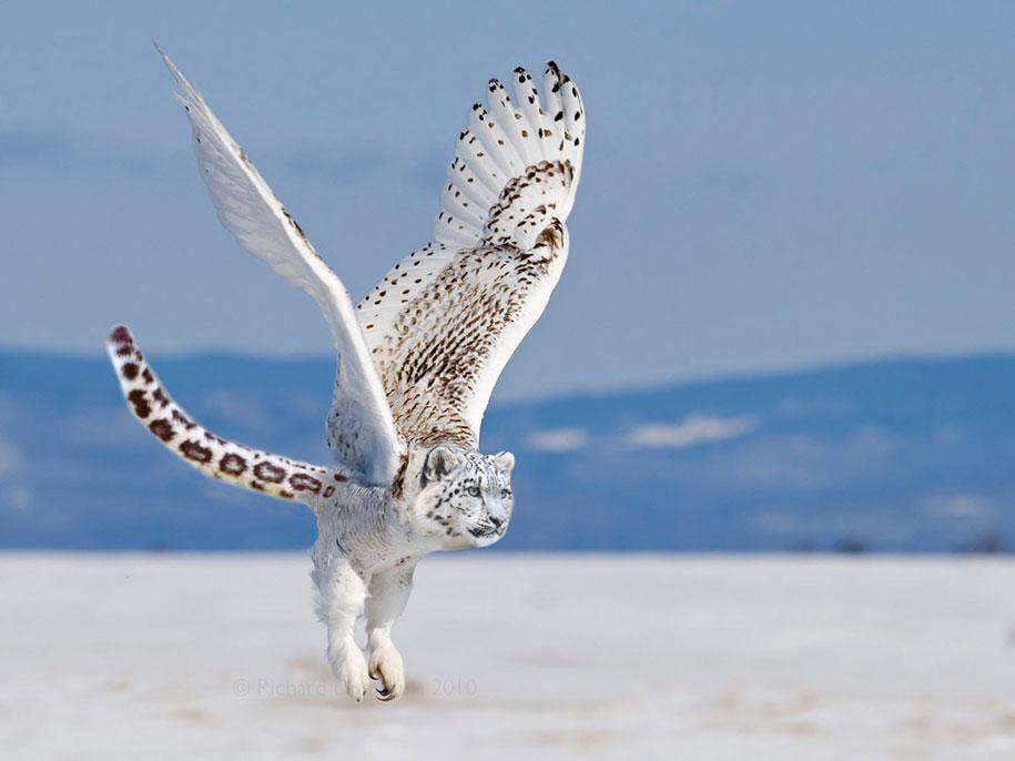 15 Creative Animal Surreal Photos (7)