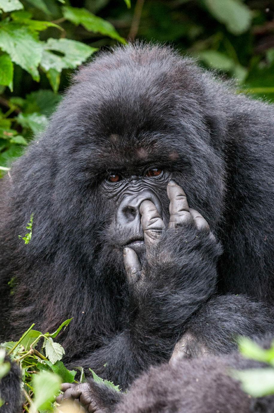 Comedy Wildlife Photography Awards 2015 (11)