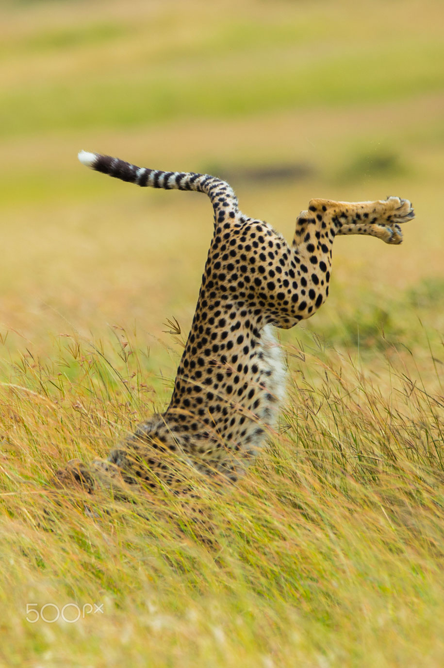 Comedy Wildlife Photography Awards 2015 (13)