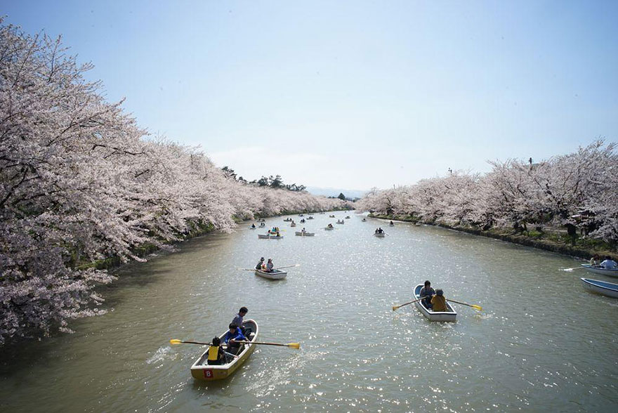 Cherry Blossom in Japan from National Geographic (1)