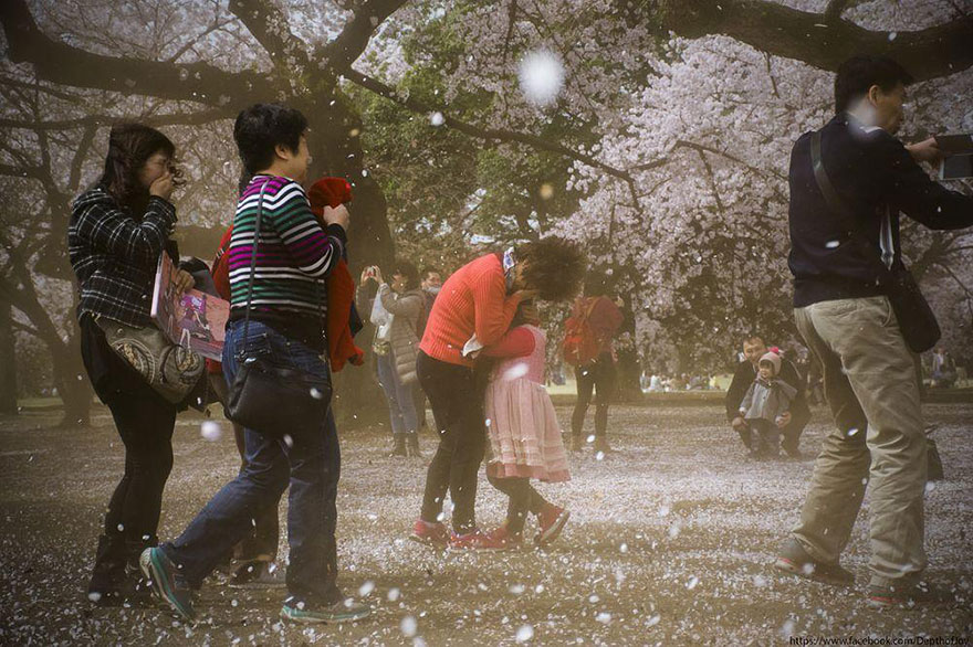 Cherry Blossom in Japan from National Geographic (10)