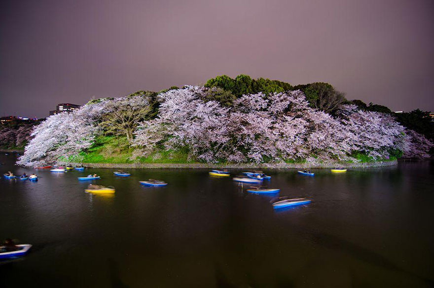 Cherry Blossom in Japan from National Geographic (12)
