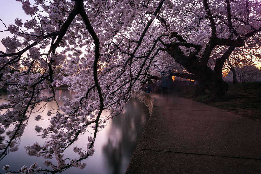 Cherry Blossom in Japan from National Geographic (14)