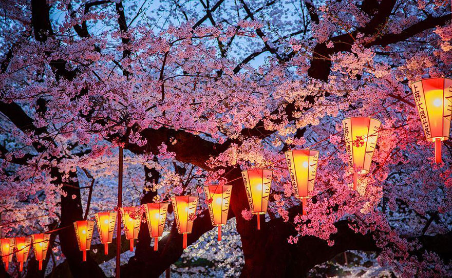 Cherry Blossom in Japan from National Geographic (15)