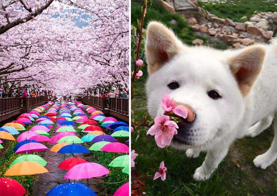 Cherry Blossom in Japan from National Geographic (16)