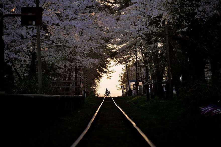 Cherry Blossom in Japan from National Geographic (2)