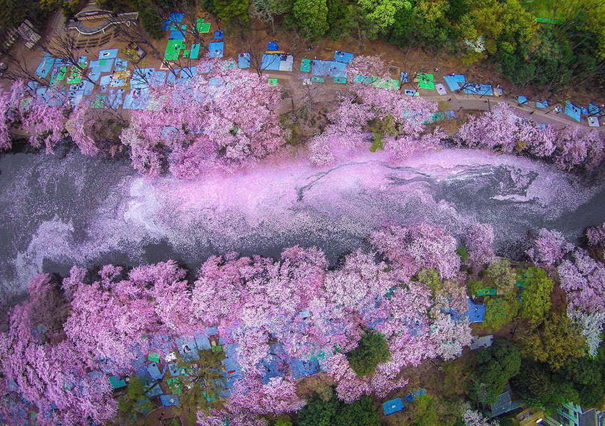 Cherry Blossom in Japan from National Geographic (5)
