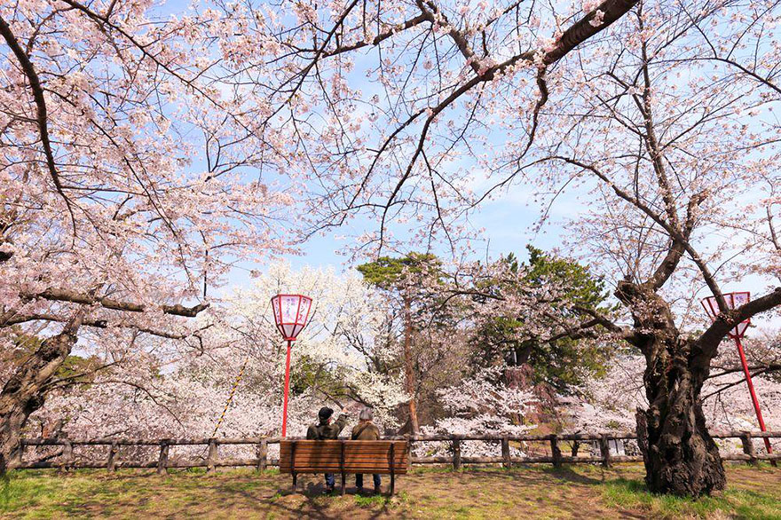 Cherry Blossom in Japan from National Geographic (9)