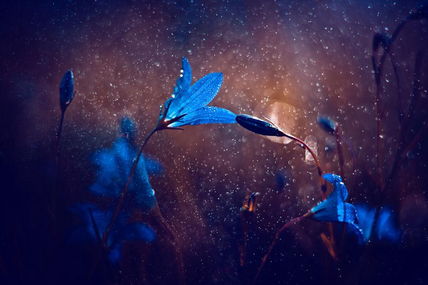 Polish photographer creating fairytale macro world (15)
