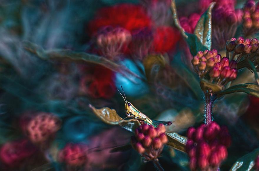 Polish photographer creating fairytale macro world (5)