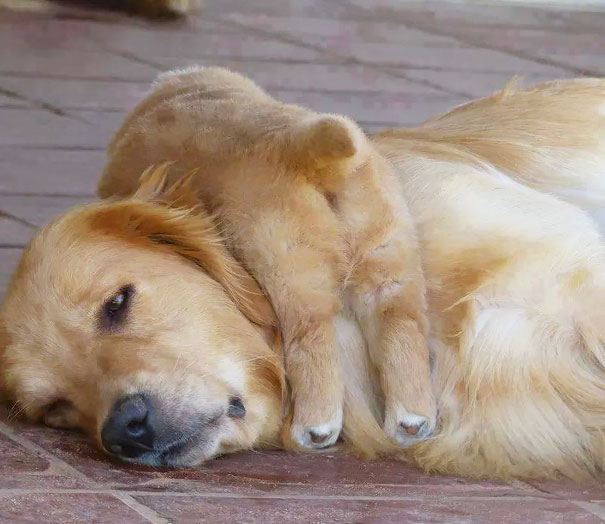 Huge Expressions Of Animals That Perfectly Defines What It's Like To Be A Mother (11)