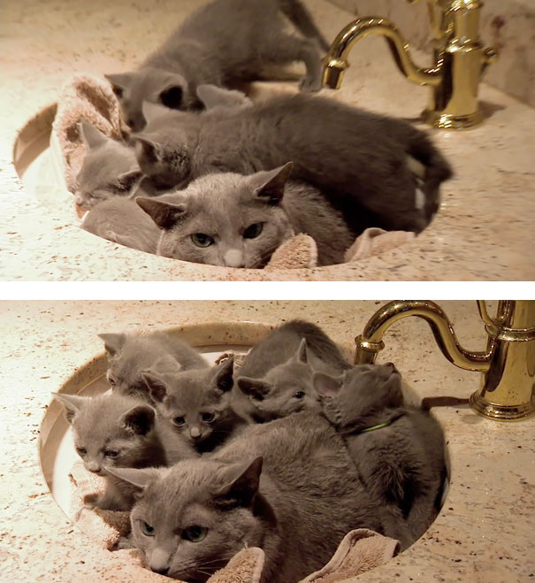 Huge Expressions Of Animals That Perfectly Defines What It's Like To Be A Mother (15)