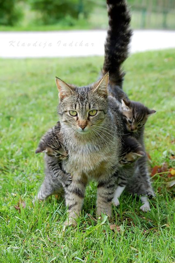 Huge Expressions Of Animals That Perfectly Defines What It's Like To Be A Mother (9)
