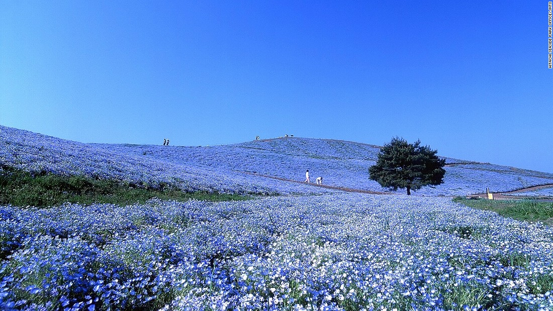 Most Beautiful Places In Japan (11)