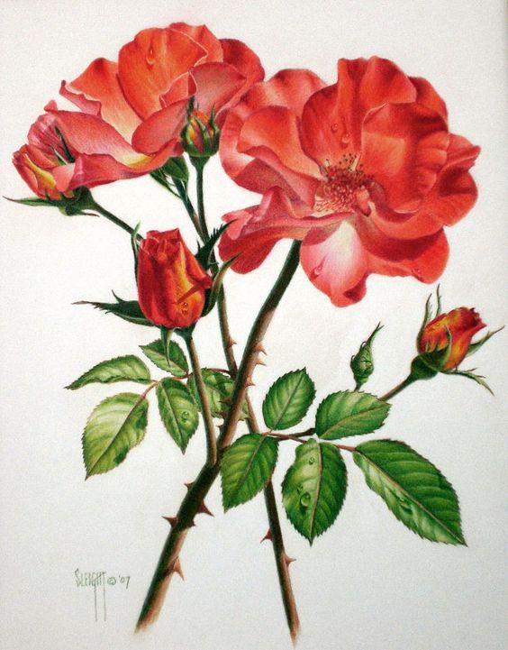 Beautiful Color Pencil Drawings (13)