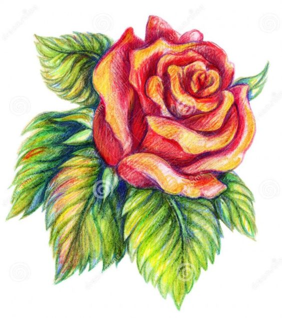 Beautiful Color Pencil Drawings (16)