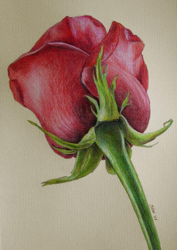 Beautiful Color Pencil Drawings (19)