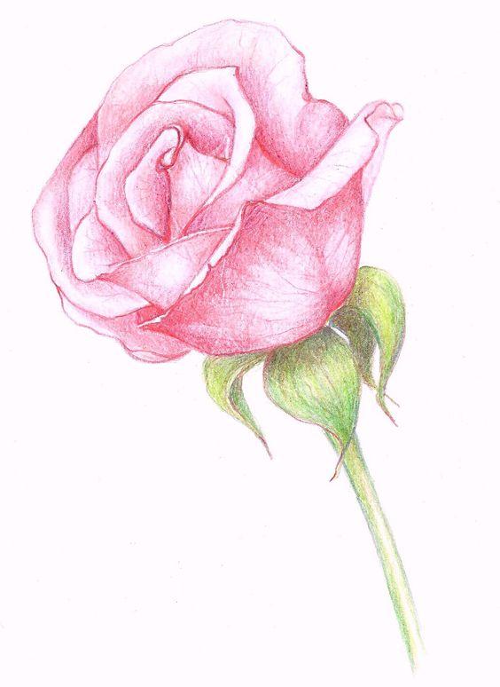Beautiful Color Pencil Drawings (21)
