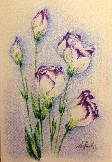 Beautiful Color Pencil Drawings (24)