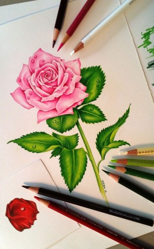 Beautiful Color Pencil Drawings (6)