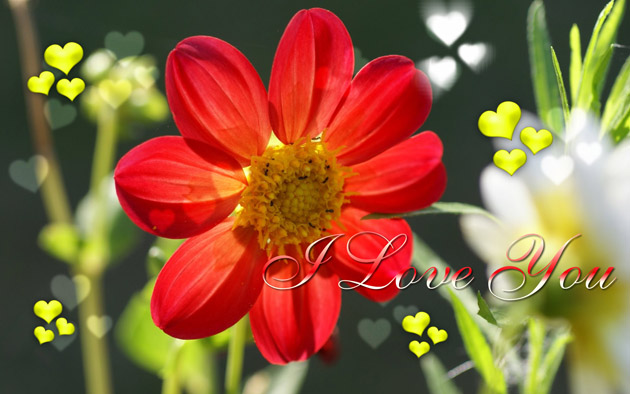I Love You HD Image Wallpapers (11)