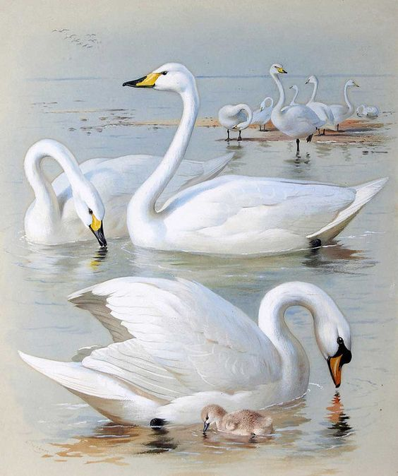 Realistic Oil Painting of Birds (11)