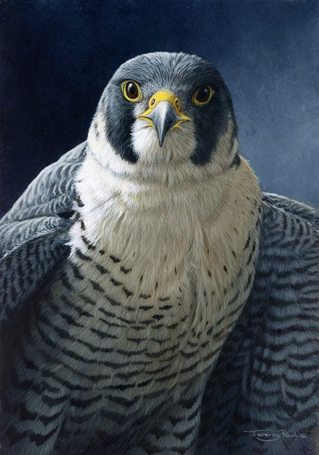 Realistic Oil Painting of Birds (26)