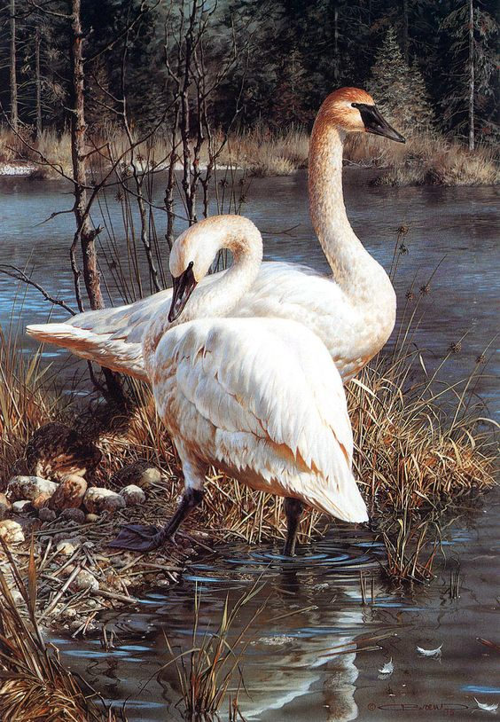 Realistic Oil Painting of Birds (4)