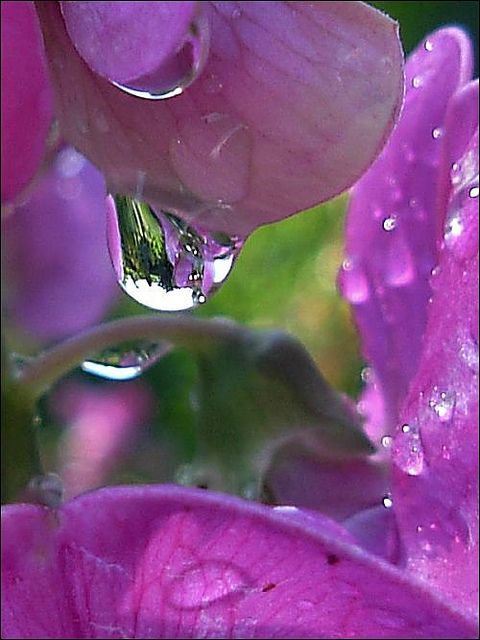 amazing-water-drop-images-11