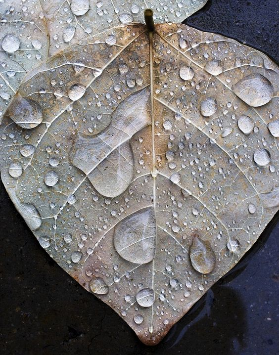 amazing-water-drop-images-5