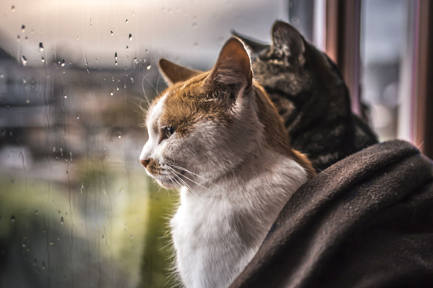 cute-cat-photos-in-front-of-the-windows-6