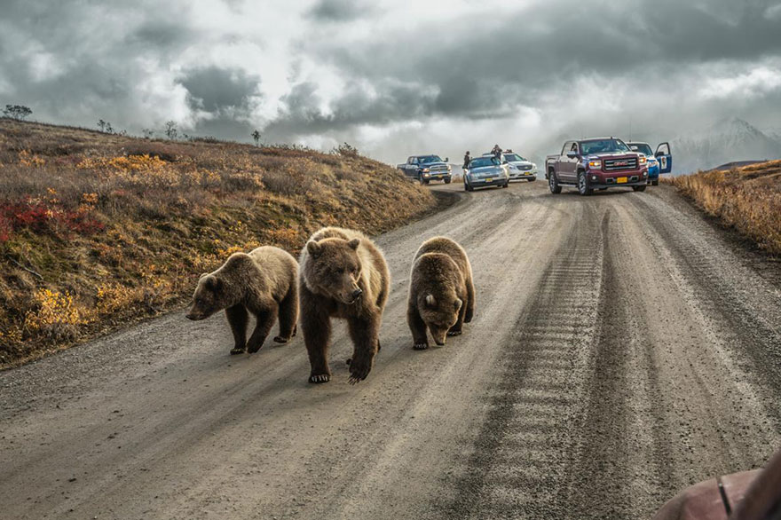 greatest-photography-of-the-year-announced-by-national-geographic-11