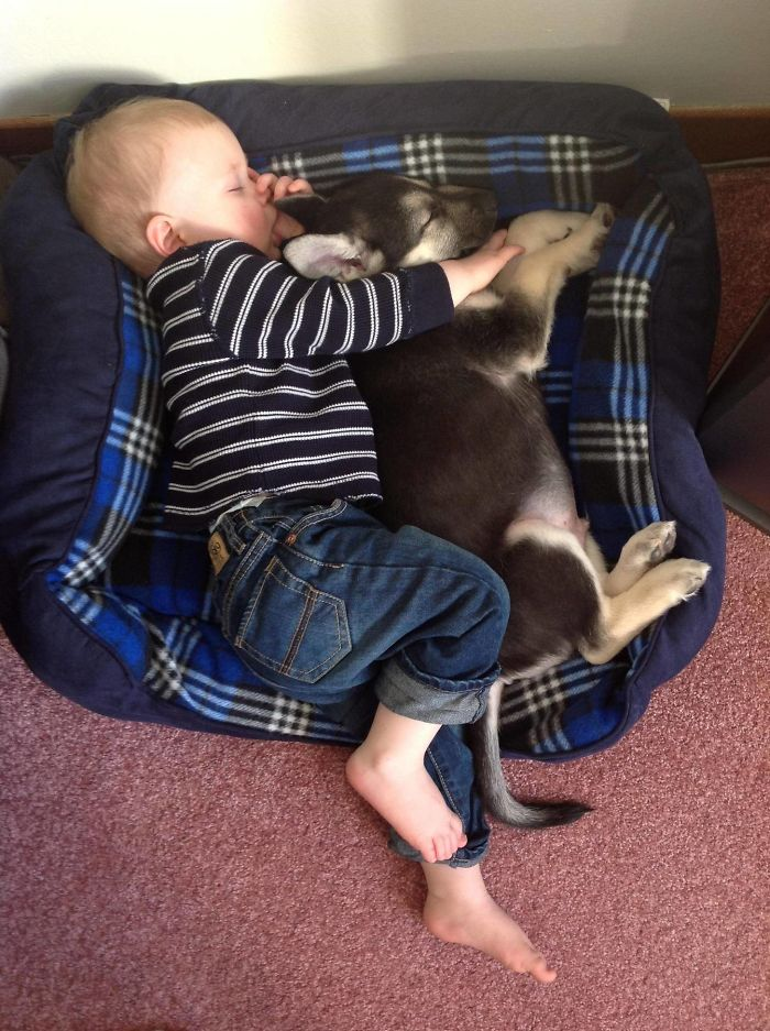 Cutest Babies Images With Puppy Dogs (2)