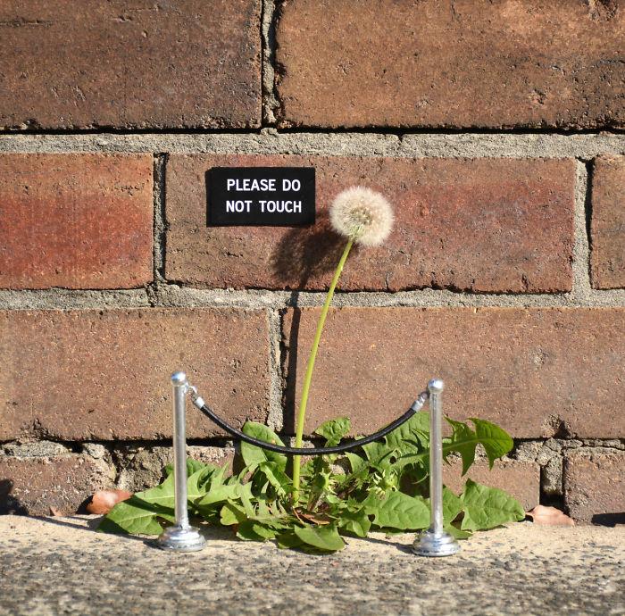 Fabulous And Stunning Nature Street Art (16)