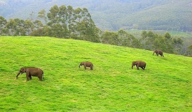 Anaimudi WildLife Sanctuary